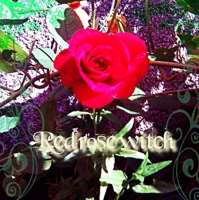 Redrosewitch